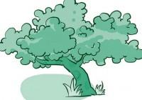 智者的树荫