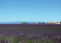 普罗旺斯:紫色的骑士之城